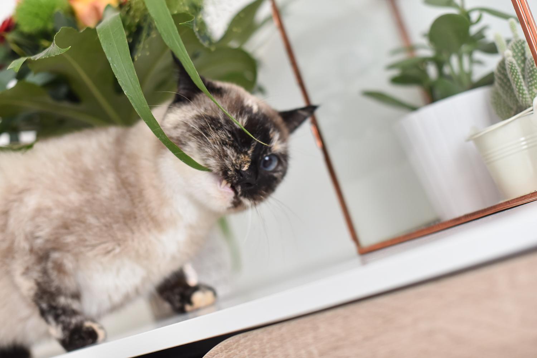 monceau-fleurs-blog