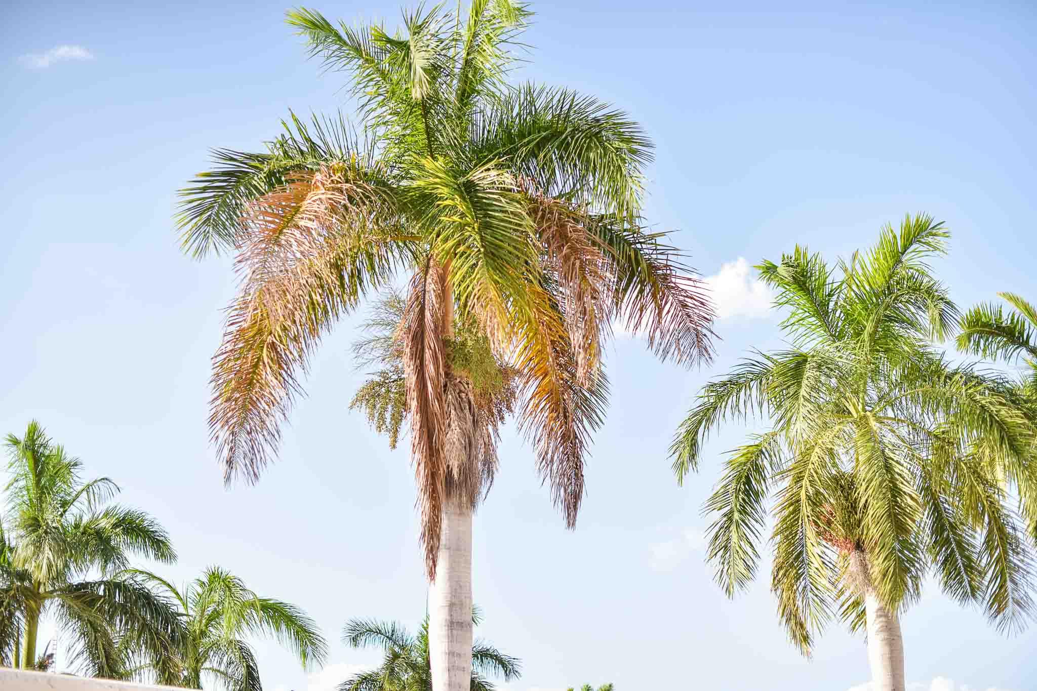 campeche mexique idée voyage